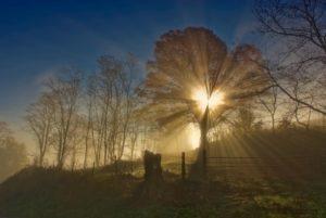 morningglory_best